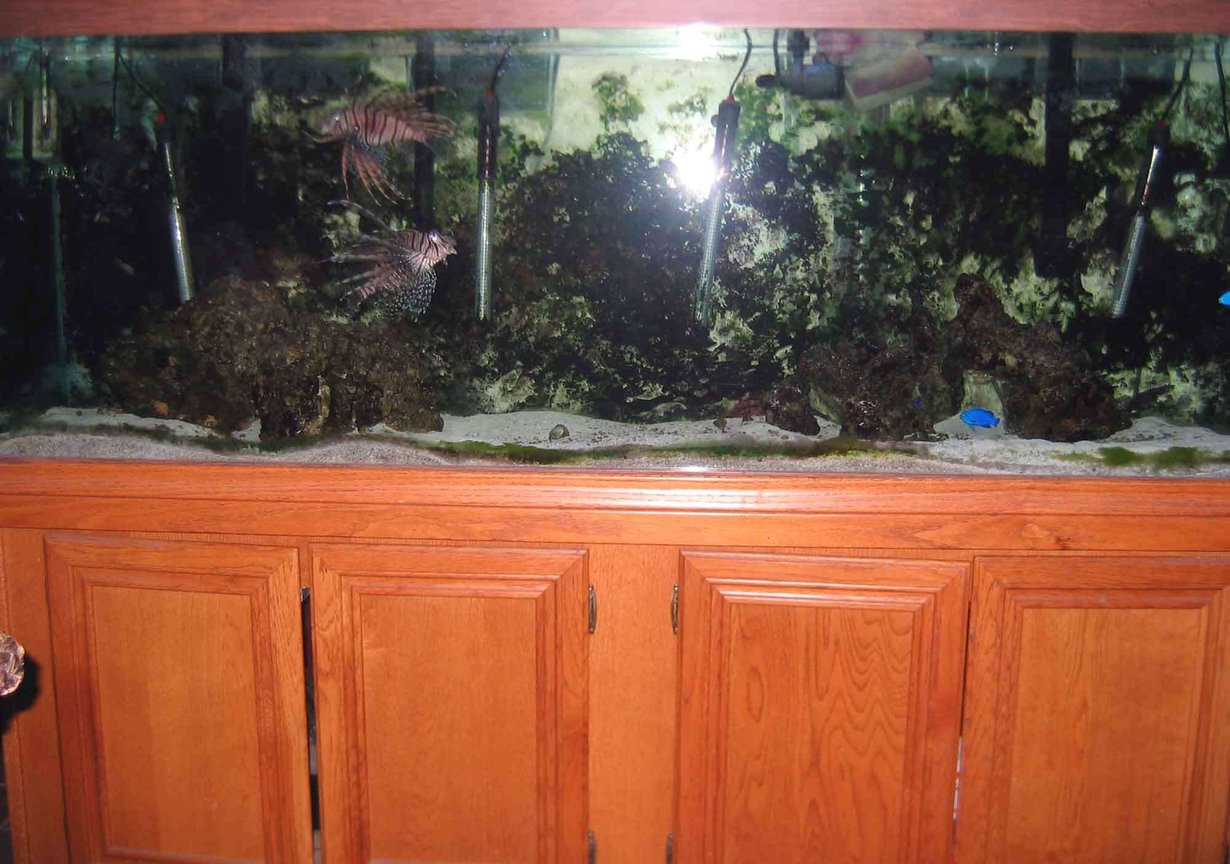180 gallons saltwater fish tank (mostly fish, little/no live coral) - 180 GALLON