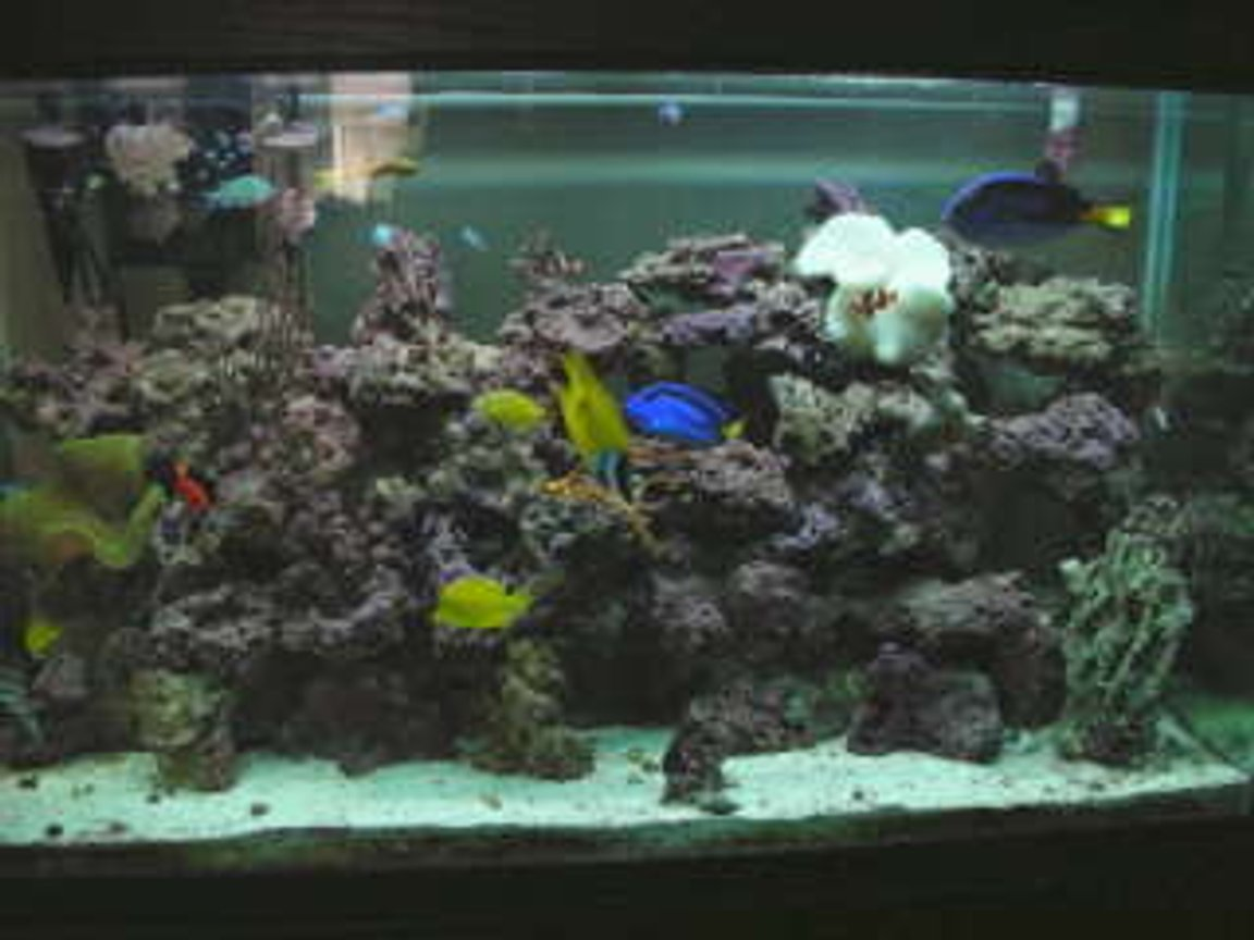 110 gallons saltwater fish tank (mostly fish, little/no live coral) - my aquarium; )