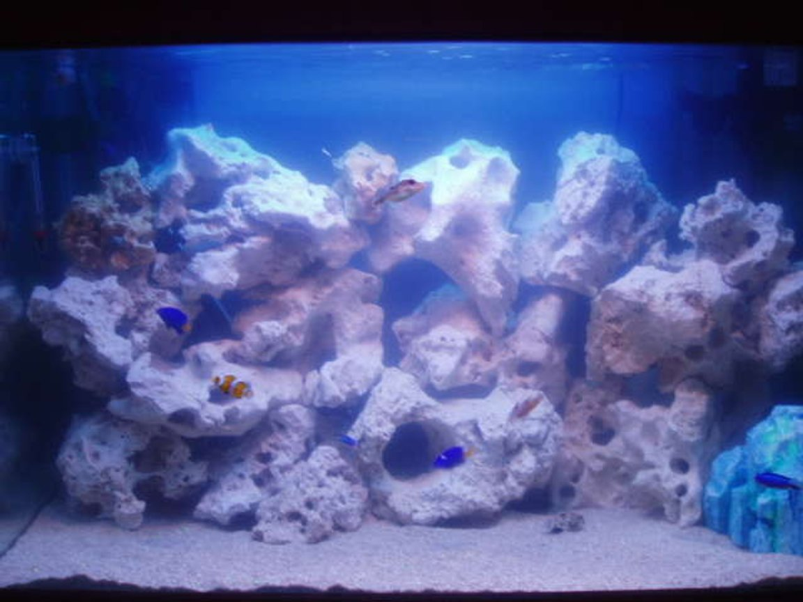 29 gallons saltwater fish tank (mostly fish, little/no live coral) - feeding fish