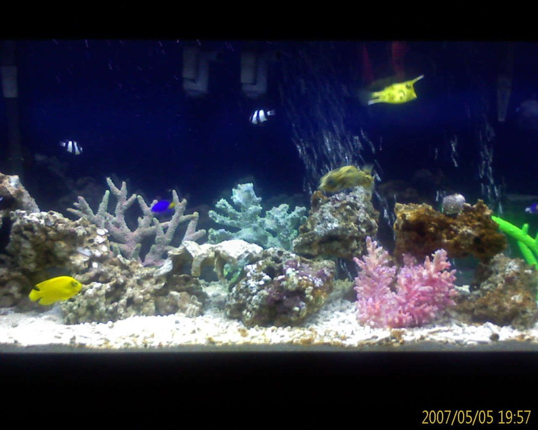 55 gallons saltwater fish tank (mostly fish, little/no live coral) - And another one
