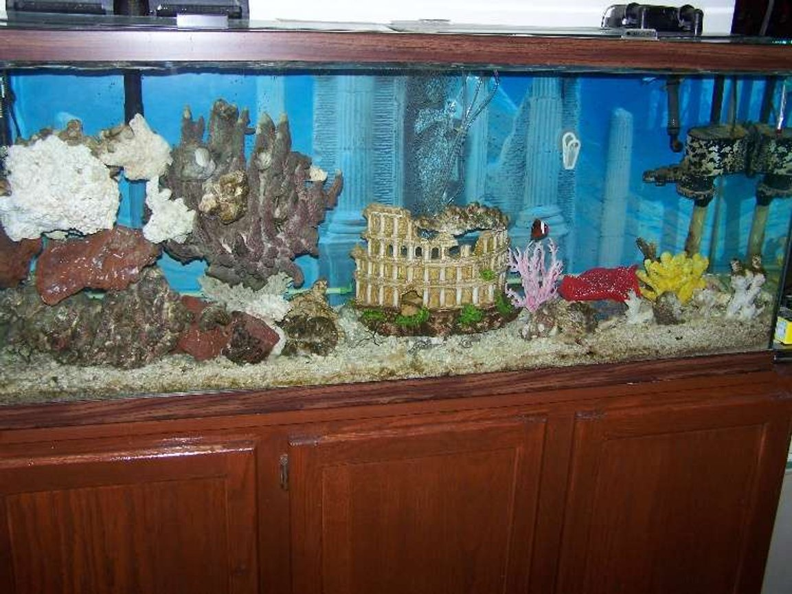55 gallons saltwater fish tank (mostly fish, little/no live coral) - Almost done! Most recent pic.