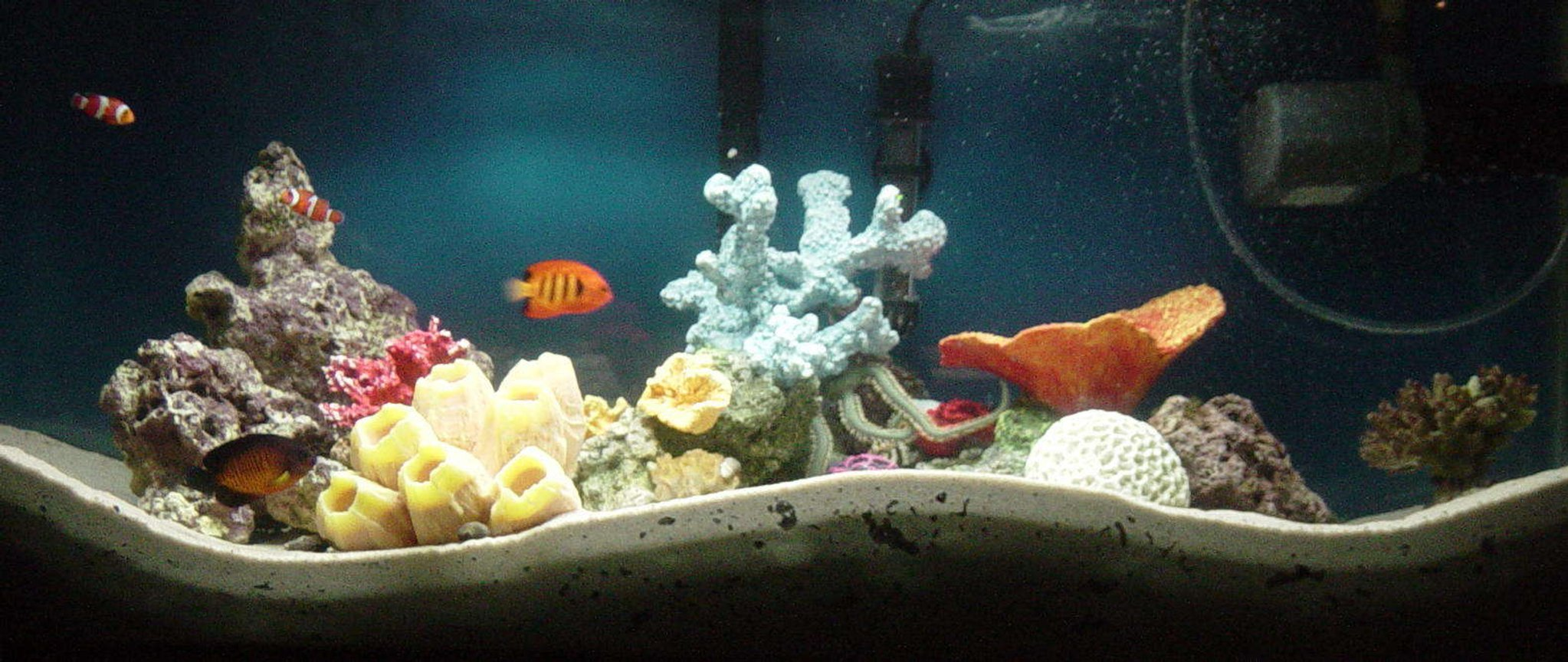35 gallons saltwater fish tank (mostly fish, little/no live coral) - my 35 gallon fish only with live rock