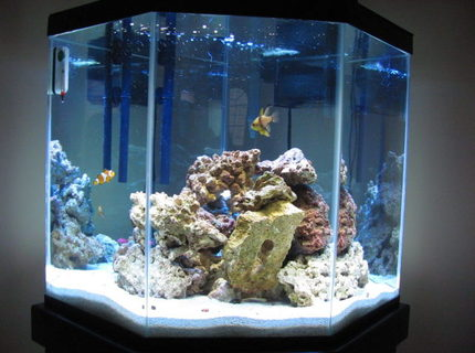 Rated #6: 44 Gallons Saltwater Fish Tank - Front view of my tank.