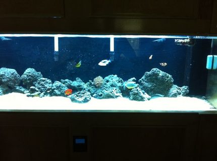 Rated #8: 125 Gallons Saltwater Fish Tank - my 125 gallon acrylic tank with a self built custom made solid maple stand
