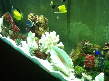 Rated #10: 150 Gallons Saltwater Fish Tank - go fish!