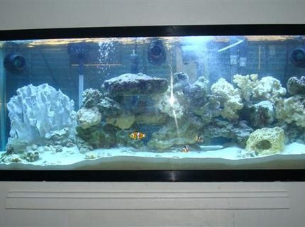 Rated #5: 55 Gallons Saltwater Fish Tank - My 55 gallon with 300 watt power compact lights, fluval 405 filter, 3 hydor coralia powerheads, 3 clowns and dragon wrasse