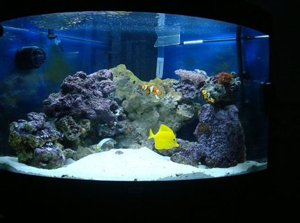 Rated #5: 50 Gallons Saltwater Fish Tank - Juwel Trigon 190 about 5 weeks after purchase.