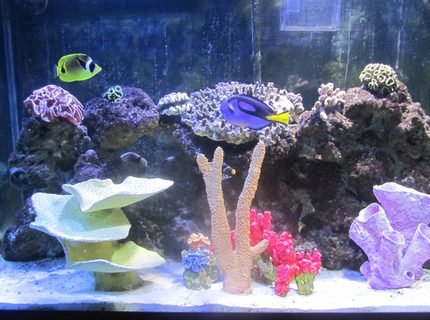 Rated #4: 150 Gallons Saltwater Fish Tank - Front View