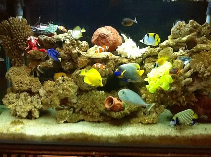 Rated #5: 90 Gallons Saltwater Fish Tank - My seawater fish tank