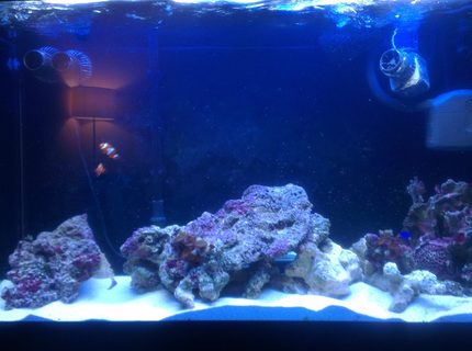90 gallons saltwater fish tank (mostly fish, little/no live coral) - More rock added