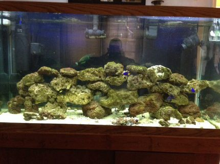 90 gallons saltwater fish tank (mostly fish, little/no live coral) - 90 gallon salt water tank w/live rock