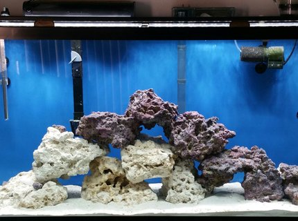 50 gallons saltwater fish tank (mostly fish, little/no live coral) - Fowlr tank