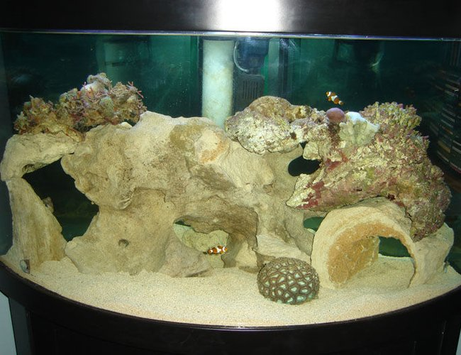 82 gallons saltwater fish tank (mostly fish, little/no live coral) - Saltwater Tank