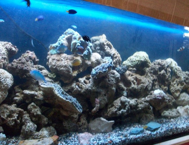 60 gallons saltwater fish tank (mostly fish, little/no live coral) - 70 gal FWLR, newbie set-up