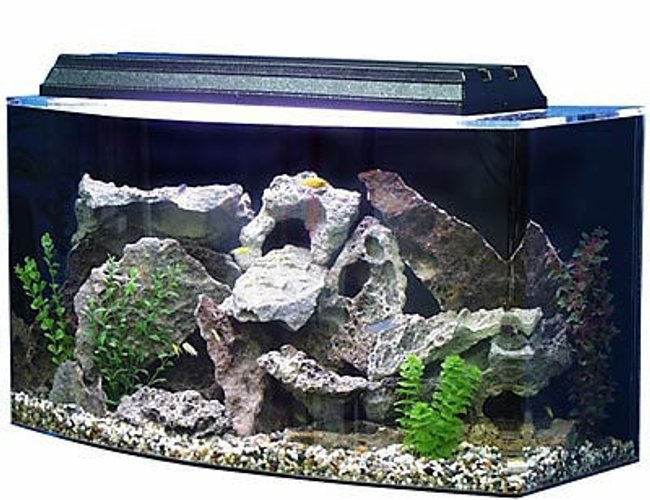 60 gallons saltwater fish tank (mostly fish, little/no live coral) - best tank on earth