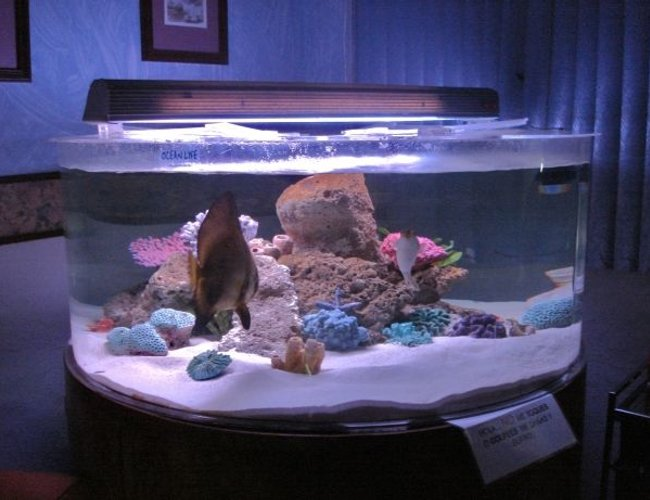 375 gallons saltwater fish tank (mostly fish, little/no live coral) - 150 gal acrylic tank
