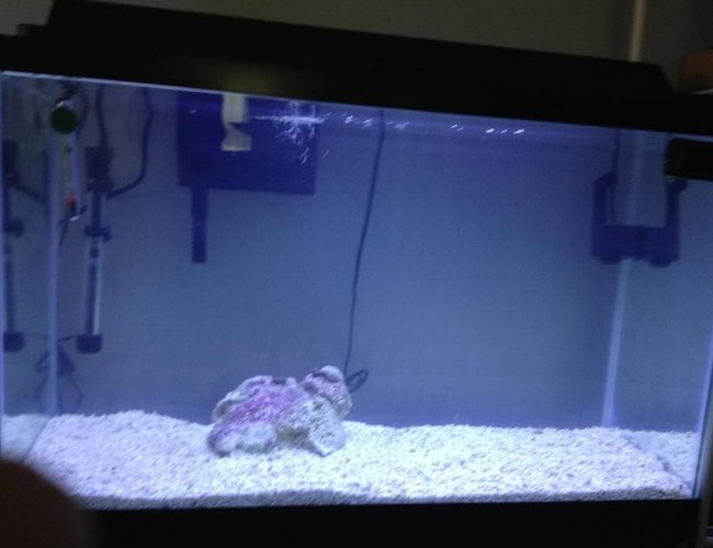 29 gallons saltwater fish tank (mostly fish, little/no live coral) - starting out my saltwater tank