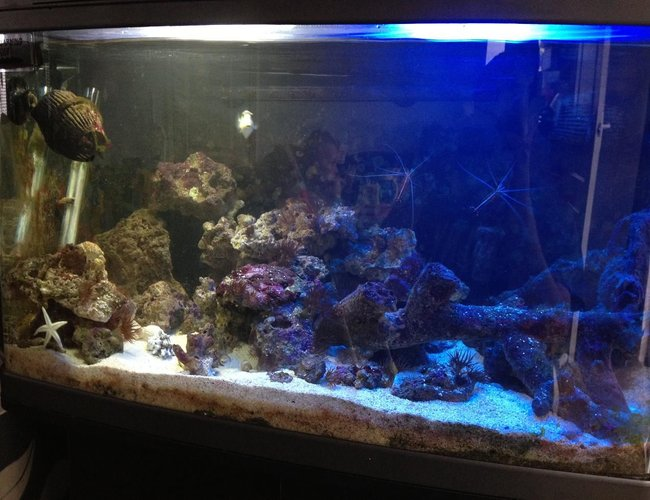 22 gallons saltwater fish tank (mostly fish, little/no live coral) - Here I have my fishbox currently housing: