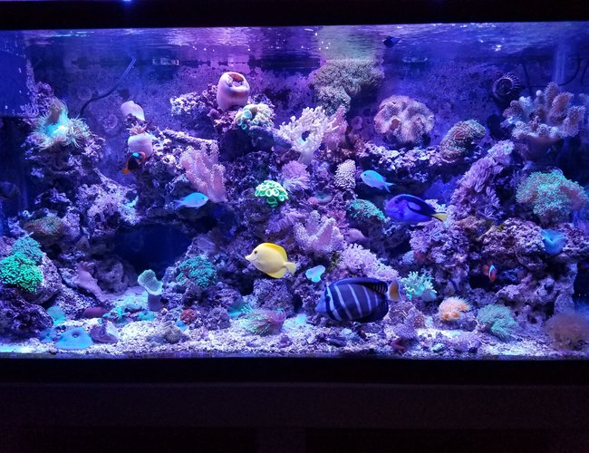 view all top ten saltwater fish tanks - 90 gallons saltwater fish tank (mostly fish, little/no live coral) - Fishhhhhy