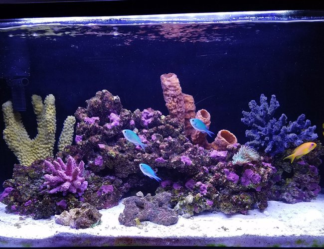 20 gallons saltwater fish tank (mostly fish, little/no live coral) - My post hurricane Irma tank