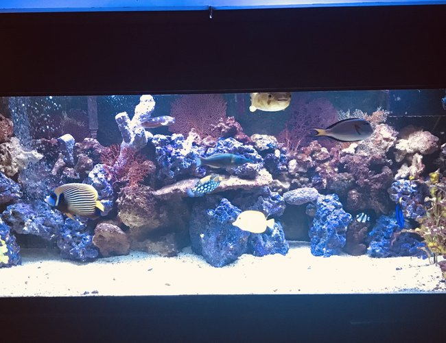 150 gallons saltwater fish tank (mostly fish, little/no live coral) - 150 Gallon FOWLR