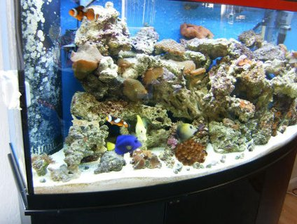 Rated #58: 72 Gallons Saltwater Fish Tank - Antoher pic of my tank a little less blury