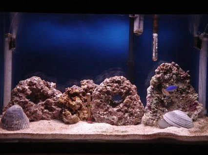 Rated #58: 29 Gallons Saltwater Fish Tank - This is where I stand it has been a little over 2 months.