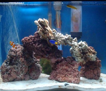 Rated #15: 20 Gallons Saltwater Fish Tank - 20 gallon