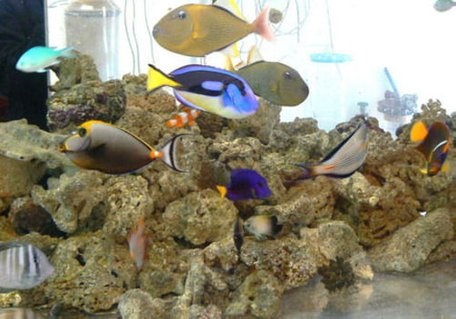 Rated #11: 12 Gallons Saltwater Fish Tank - saltwater fish tank; no plants;