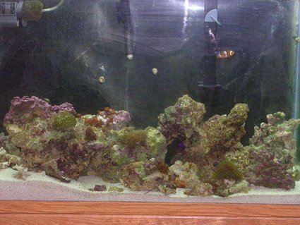 Rated #60: 45 Gallons Saltwater Fish Tank - work in progress
