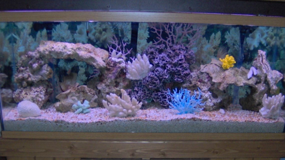 Rated #22: 55 Gallons Saltwater Fish Tank - New tank, no fish yet