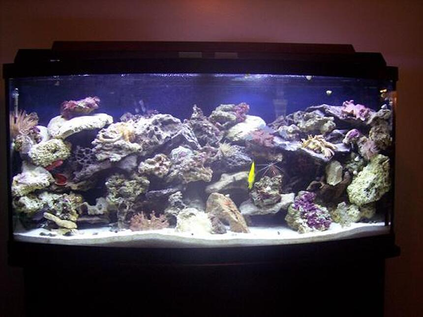 Rated #3: 72 Gallons Saltwater Fish Tank - 72 Gal. bow front. There is 1 emperior 400 filter with along with a magnum 350 and a skilter 450. This tank has:  60 pounds reef sand, 75 lbs base rock, 50 lbs live rock, 2 leather corals, 3 anemones,3 feather dusters, 3 colonies of red mushrooms, 1 clam, 1 yellow tang,1 demsal, 1 maroon clown, 1 scooter blenny, 5 chromis, 1 pink cucumber,2 cleaner shrimp, 1 scallop, 1 angelfish, 1 serpent star.