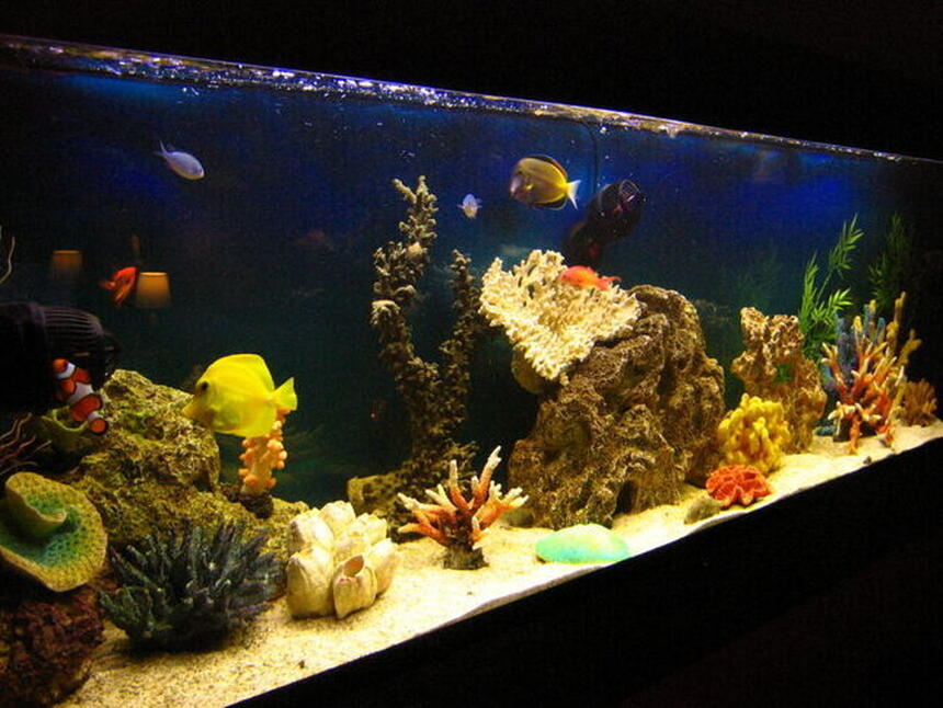 Rated #34: 105 Gallons Saltwater Fish Tank - Fish only tank after 1 year