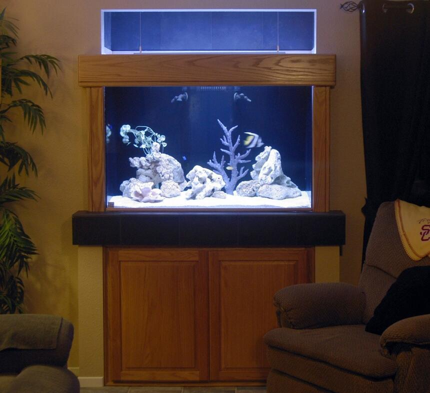 Rated #62: 150 Gallons Saltwater Fish Tank