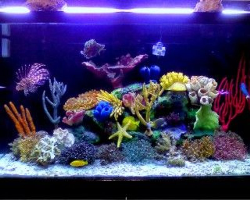 Rated #43: 120 Gallons Saltwater Fish Tank - My renovaded tannk !!!!!! new stuff to make even better !!!!!
