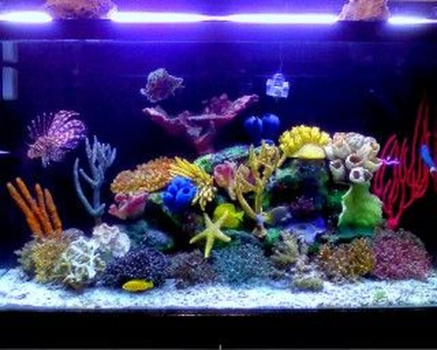 Rated #39: 120 Gallons Saltwater Fish Tank - My renovaded tannk !!!!!! new stuff to make even better !!!!!