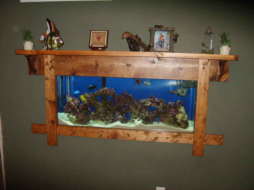 Rated #63: 55 Gallons Saltwater Fish Tank - 55 Gallon FOWLR...recently mounted in wall.
