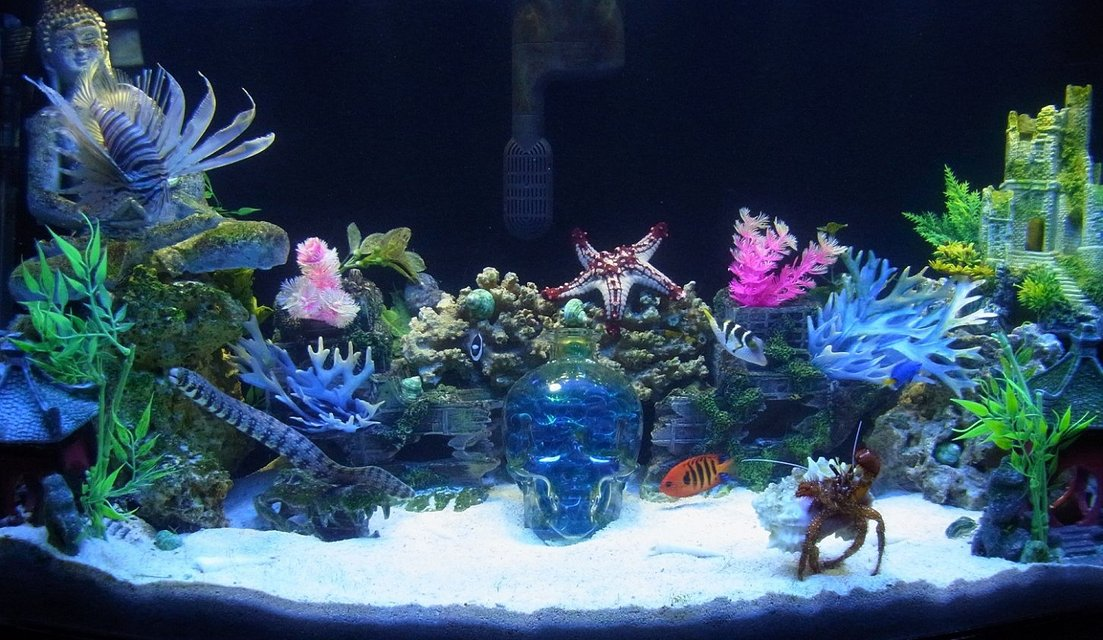 Rated #1: 50 Gallons Saltwater Fish Tank - 50 gallon bowfront
