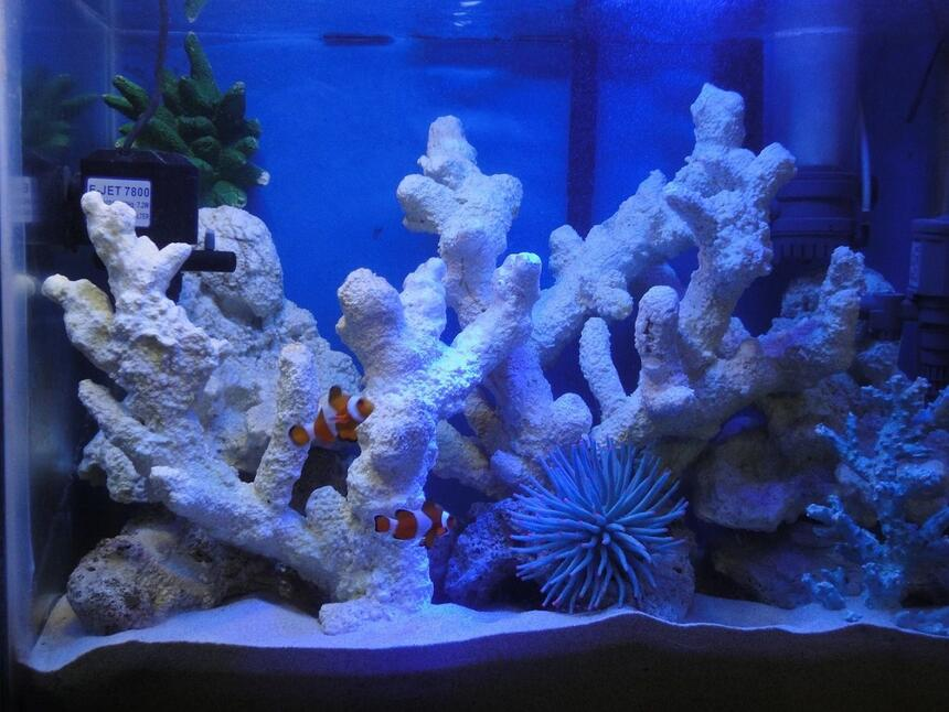 Rated #6: 20 Gallons Saltwater Fish Tank - My 20 Gallon saltwater fish only tank with artificial rocks