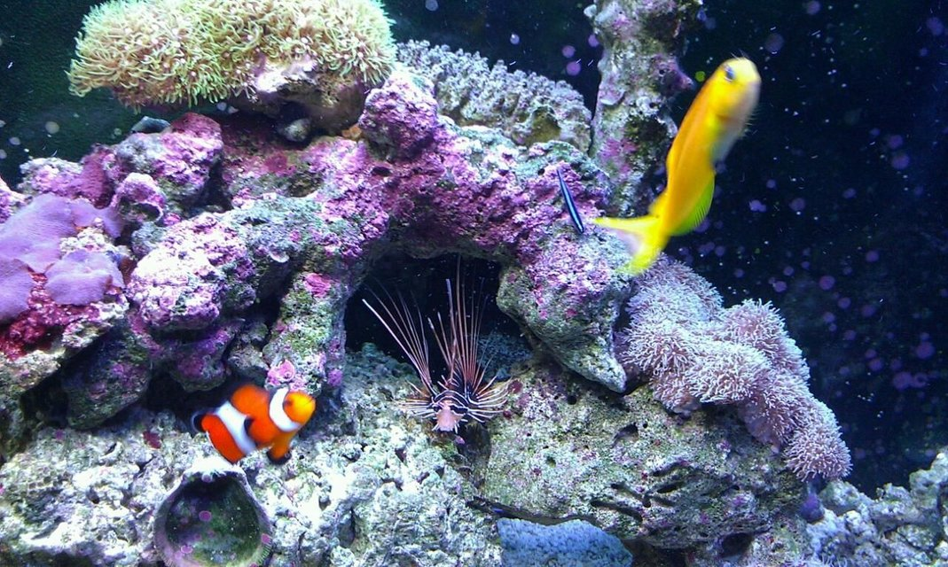 Rated #22: 37 Gallons Saltwater Fish Tank - My kids