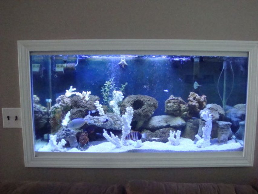 Rated #2: 90 Gallons Saltwater Fish Tank - 90 gallon