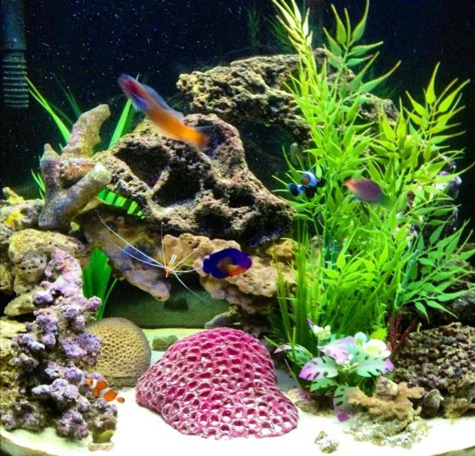 Rated #11: 26 Gallons Saltwater Fish Tank - Hard to get all of them in the same picture, and not moving so its not blurry. Lol Best one I had out of the 100 I tried.