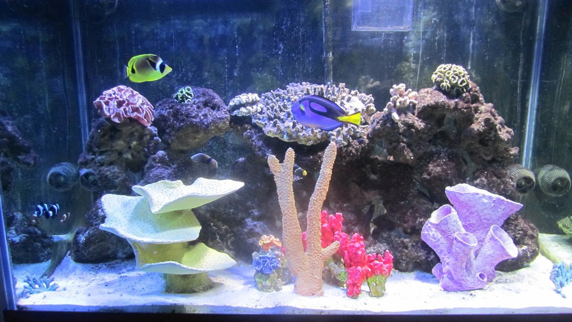 Rated #93: 150 Gallons Saltwater Fish Tank - Front View