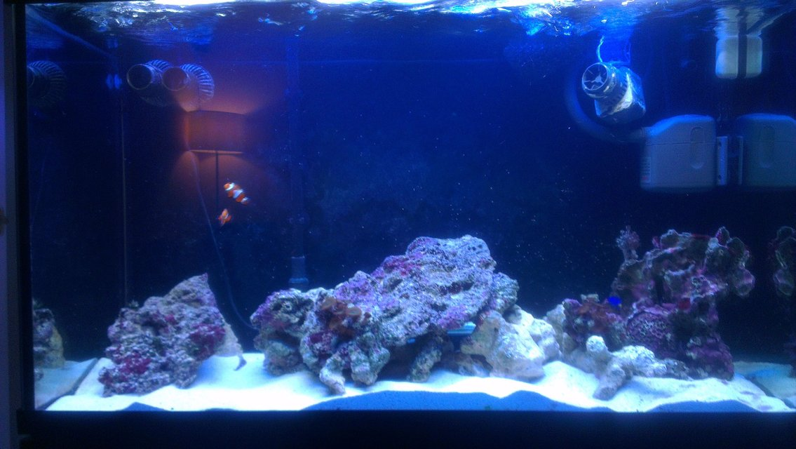 Rated #11: 90 Gallons Saltwater Fish Tank - More rock added