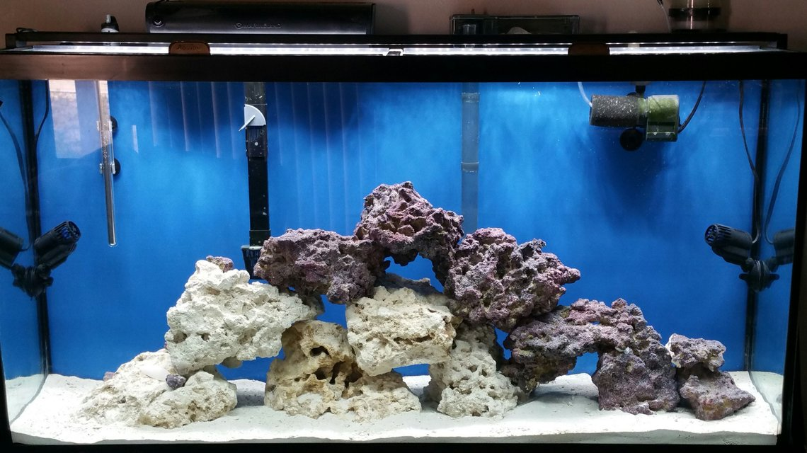 Rated #3: 50 Gallons Saltwater Fish Tank - Fowlr tank