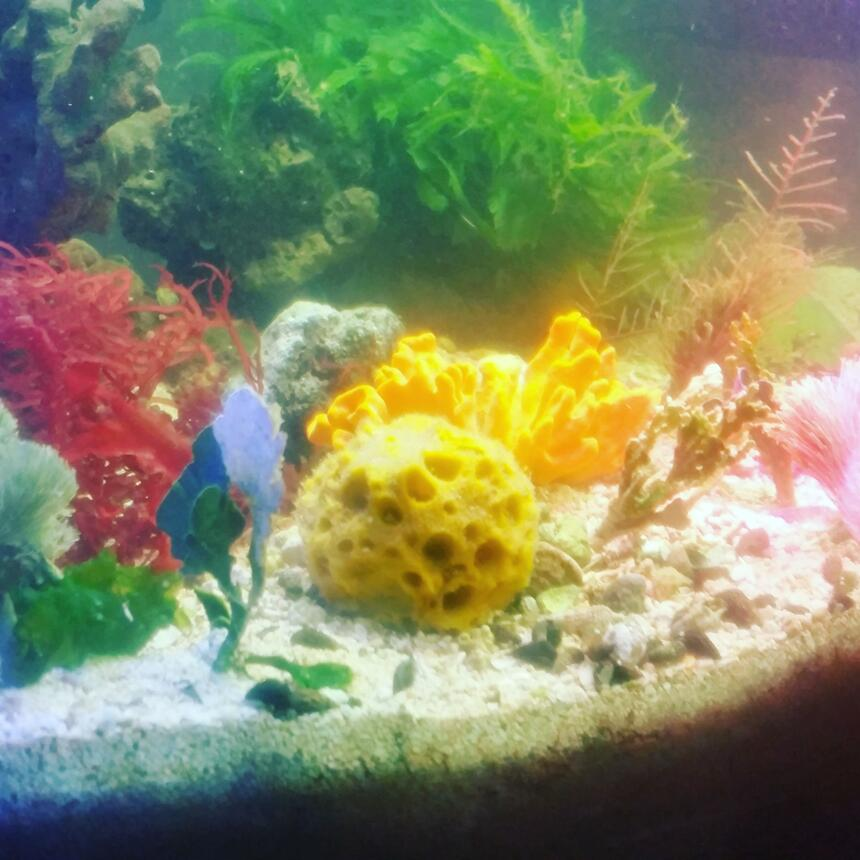 Rated #8: 40 Gallons Saltwater Fish Tank - Just my 40 gallon breeder tank macroalgae and sponges