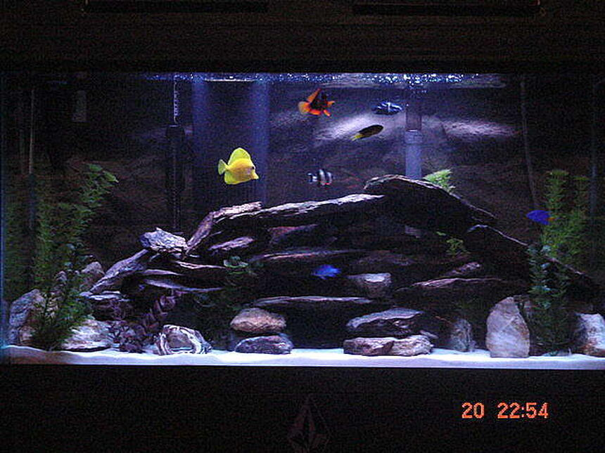 Rated #7: 45 Gallons Saltwater Fish Tank - my tank