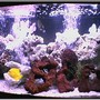 saltwater fish tank (mostly fish, little/no live coral) - 46 GALLON BOW FRONT WITH SIX FISH.TANG, TRIGGER, CLOWN, AND DAMSELS. A FEW LAVA ROCKS AND SOME DEAD CORAL...
