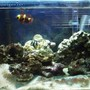 saltwater fish tank (mostly fish, little/no live coral)