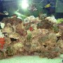 110 gallons saltwater fish tank (mostly fish, little/no live coral) - 110 Tall, polished end.